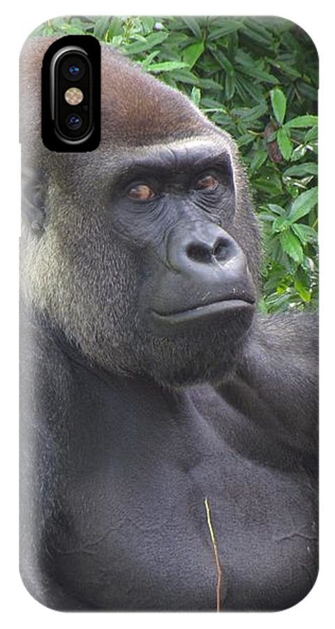 Silverback Gorilla IPhone X Case featuring the photograph Stop Looking At Me by Stuart Rosenthal