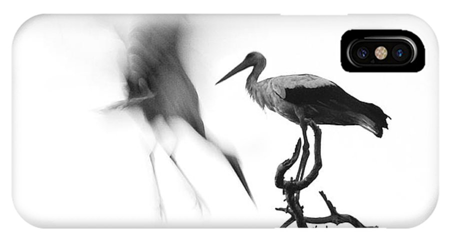 Stork IPhone X Case featuring the photograph Storks by Nahum Budin