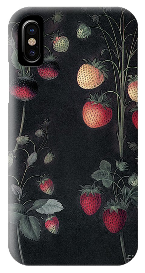 1812 IPhone X Case featuring the photograph Strawberries by Granger
