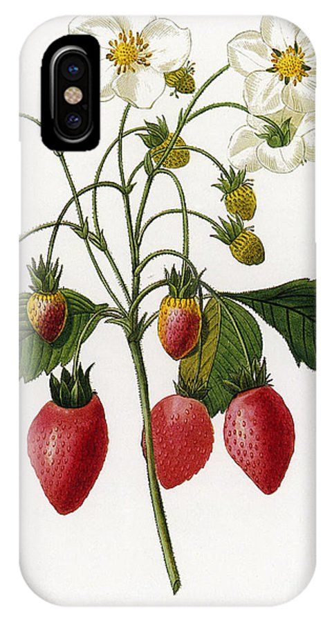 1833 IPhone X Case featuring the photograph Strawberry by Granger