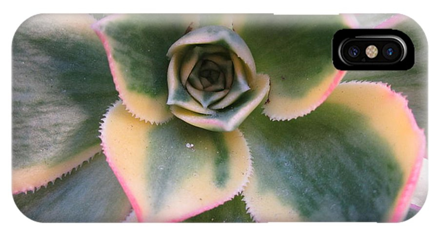 Succulent IPhone X Case featuring the photograph Succulent 2 by Randall Weidner