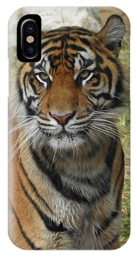 Sumatran Tiger IPhone X Case featuring the photograph Sumatran Tiger by Matthew Kramer