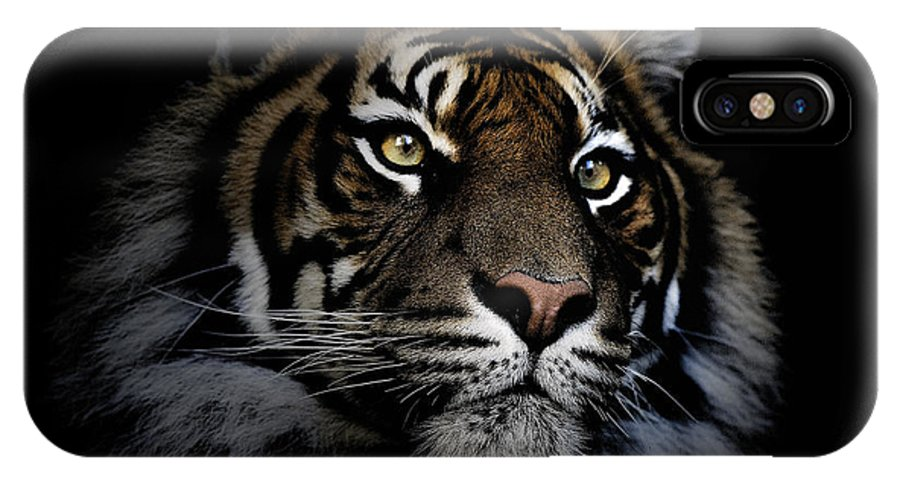 Sumatran Tiger Wildlife Endangered IPhone Case featuring the photograph Sumatran Tiger by Sheila Smart Fine Art Photography