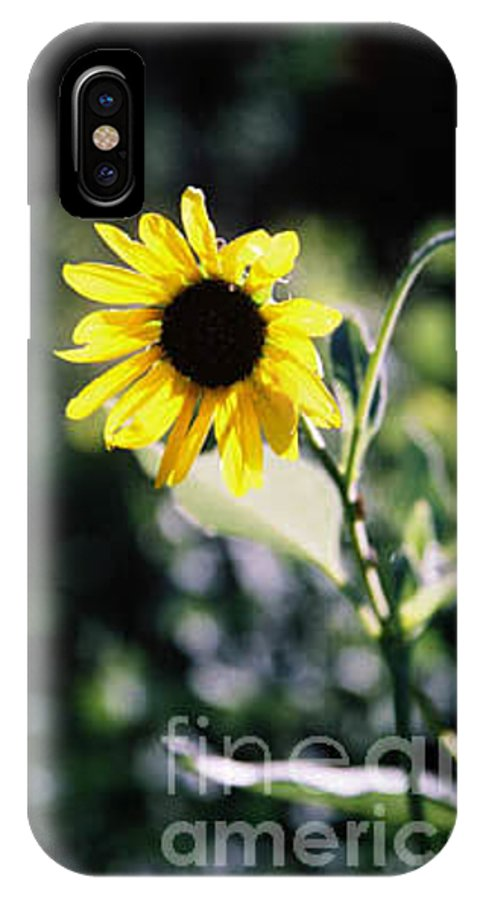 Sunflower IPhone X Case featuring the photograph Summer Sunshine by Kathy McClure
