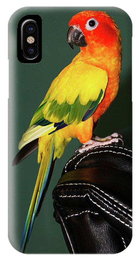 Pet IPhone X / XS Case featuring the photograph Sun Conure by Bob Slitzan