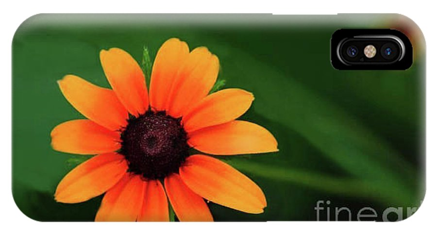 Sun Flower Greeting Cards IPhone X Case featuring the photograph Sun Dial by Kim Henderson