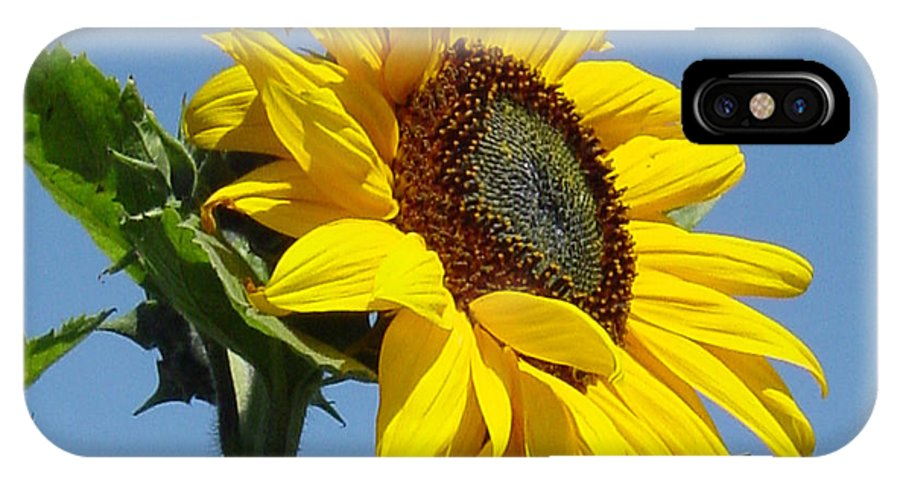 Sunflower IPhone Case featuring the photograph Sun Goddess by Suzanne Gaff
