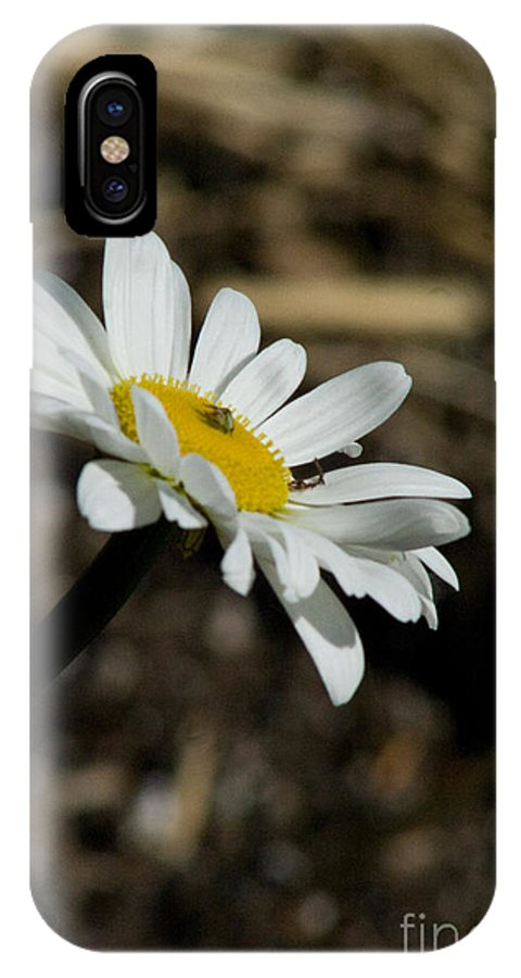 Flower IPhone X Case featuring the photograph Sunbathing On A Daisy by Martha Johnson
