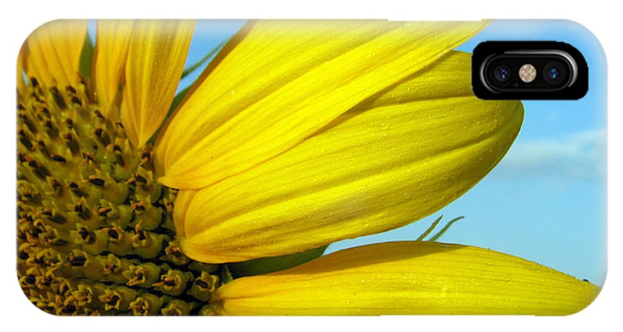 Sunflowers IPhone Case featuring the photograph Sunflower by Amanda Barcon