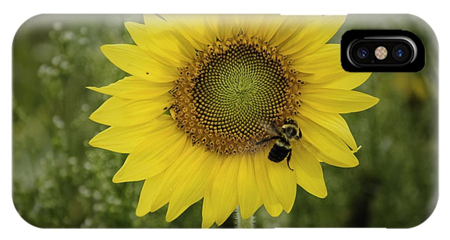 (calm Or Still) IPhone X / XS Case featuring the photograph Sunflower Among The Weeds by Debra Fedchin