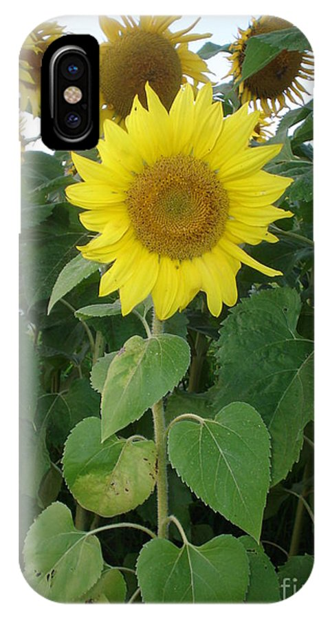 Sunflower's IPhone X Case featuring the photograph Sunflower amungst Sunflower's by Chandelle Hazen