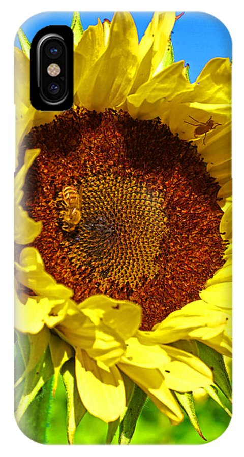 Pastoral IPhone Case featuring the photograph Sunflower And Bee by Heather Coen