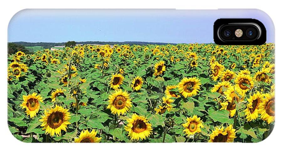 Sunflower IPhone X Case featuring the photograph Sunflower Field by HelenaP Art