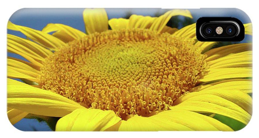Sunflower IPhone X Case featuring the photograph Sunflower Garden Art Print Yellow Summer Sun Flower Baslee by Baslee Troutman