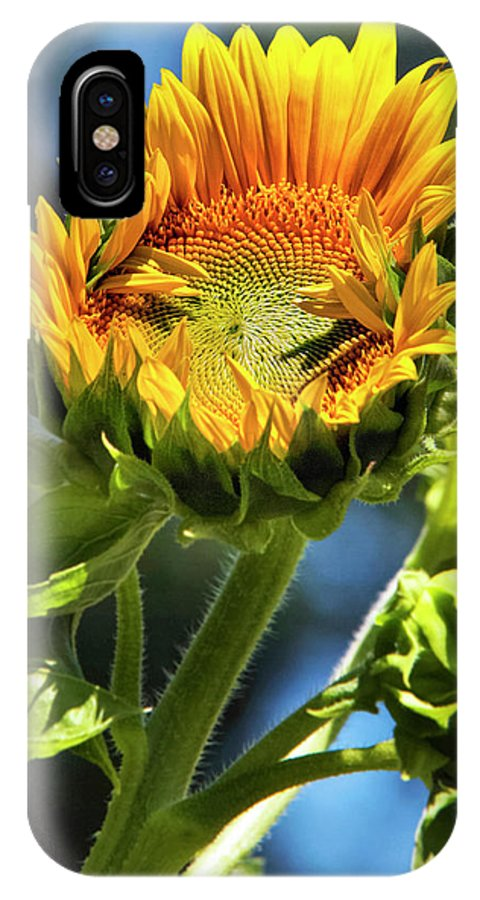 Sunflower IPhone X Case featuring the photograph Sunflower Glory by Christina Rollo