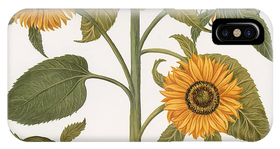 1613 IPhone X Case featuring the photograph Sunflower by Granger