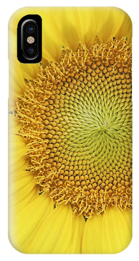 Sunflower IPhone X Case featuring the photograph Sunflower by Margie Wildblood