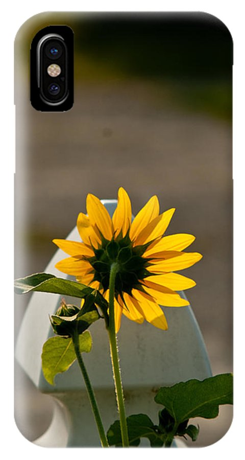 Sun IPhone X Case featuring the photograph Sunflower Morning by Douglas Barnett