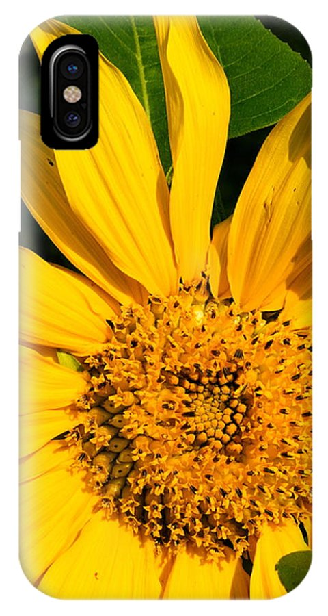 Sunflower IPhone X Case featuring the photograph Sunflower Smile by Amanda Kiplinger