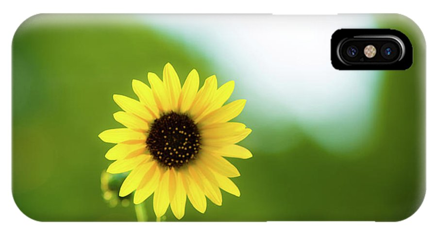 Flower.sunflower IPhone X Case featuring the photograph Sunflower by Steeve Jensen