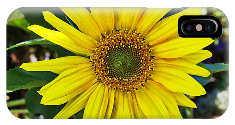 Sunflower IPhone X Case featuring the digital art Sunflower by Sterling Haidt