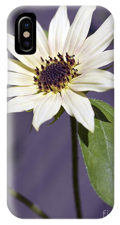 Helianthus Annus IPhone X Case featuring the photograph Sunflower by Tony Cordoza