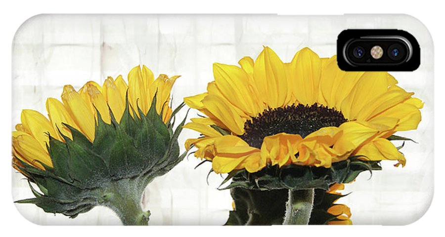 Yellow Sunflowers IPhone X / XS Case featuring the photograph Sunflower Trio by Margie Avellino
