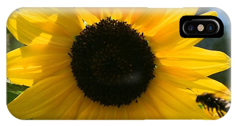 Flower IPhone X Case featuring the photograph Sunflower With Bee by Dean Triolo