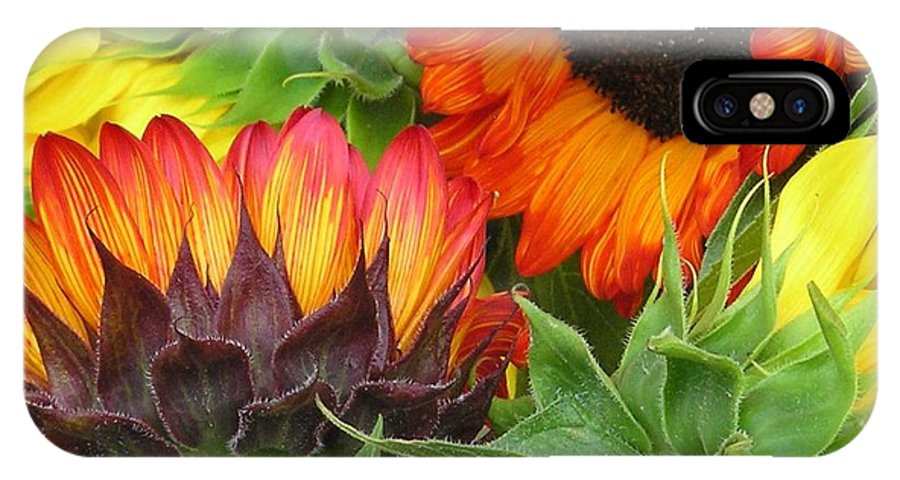 Floral IPhone X Case featuring the photograph Sunflower2 by Ellen Leigh