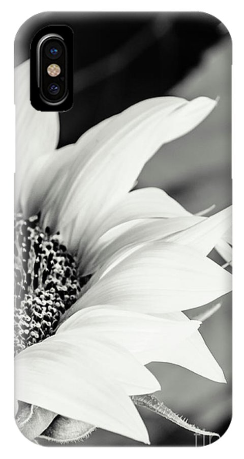 Sunflowers IPhone X Case featuring the photograph Sunflowers 16 by Andrea Anderegg