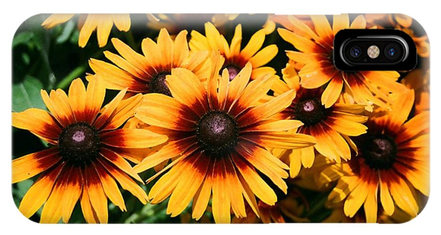 Sunflowers IPhone X Case featuring the photograph Sunflowers by Dean Triolo