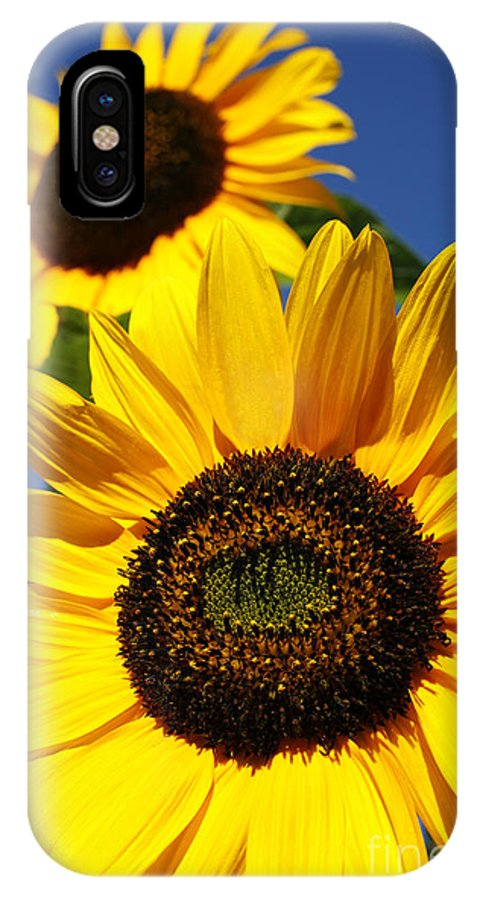 Sunflowers IPhone X Case featuring the photograph Sunflowers by Gaspar Avila