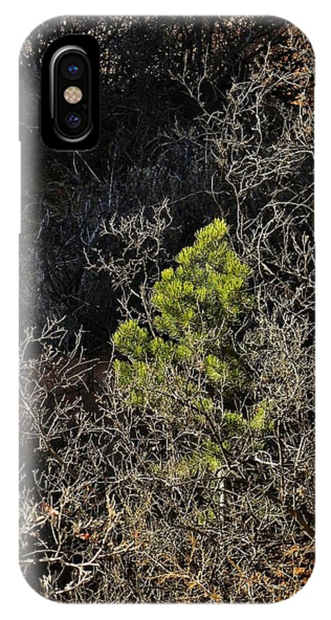 Colorado IPhone X Case featuring the photograph Sunlight On Pine by CL Redding