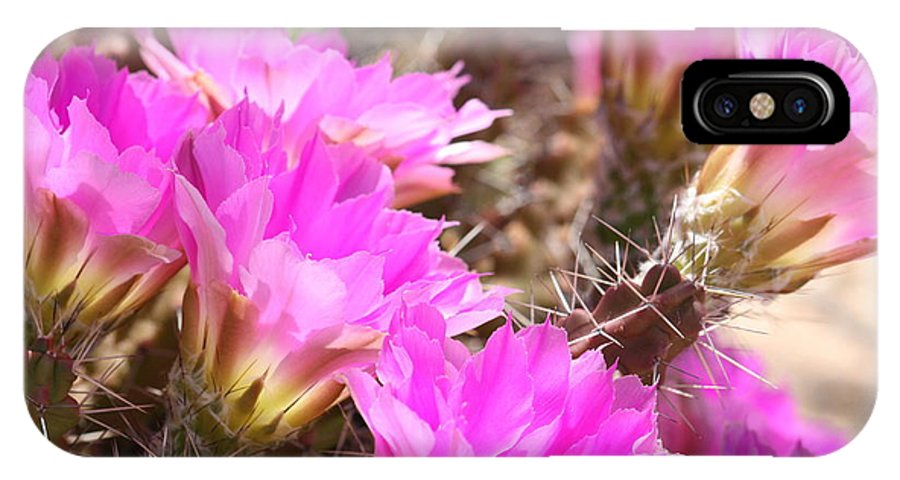 Pink Cactus Flowers IPhone X Case featuring the photograph Sunlight On Pink Cactus Blooms by Carol Groenen