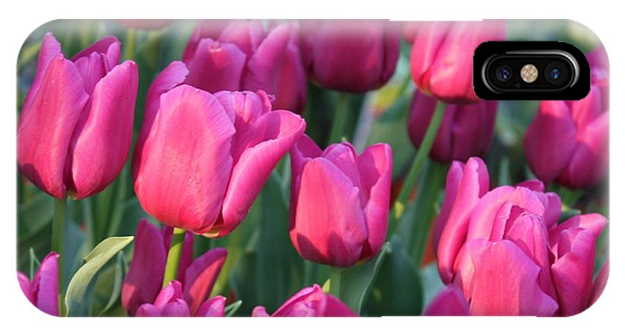 Pink Tulips IPhone X Case featuring the photograph Sunlight On Pink Tulips by Carol Groenen