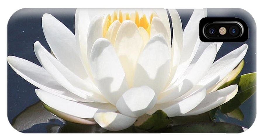 Flower IPhone X Case featuring the photograph Sunlight On Water Lily by Carol Groenen