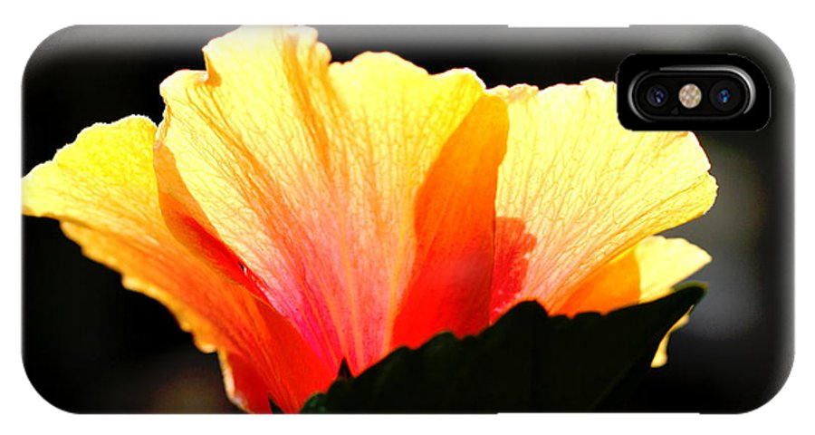 Floral IPhone X Case featuring the photograph Sunlit Hibiscus by Diane Merkle