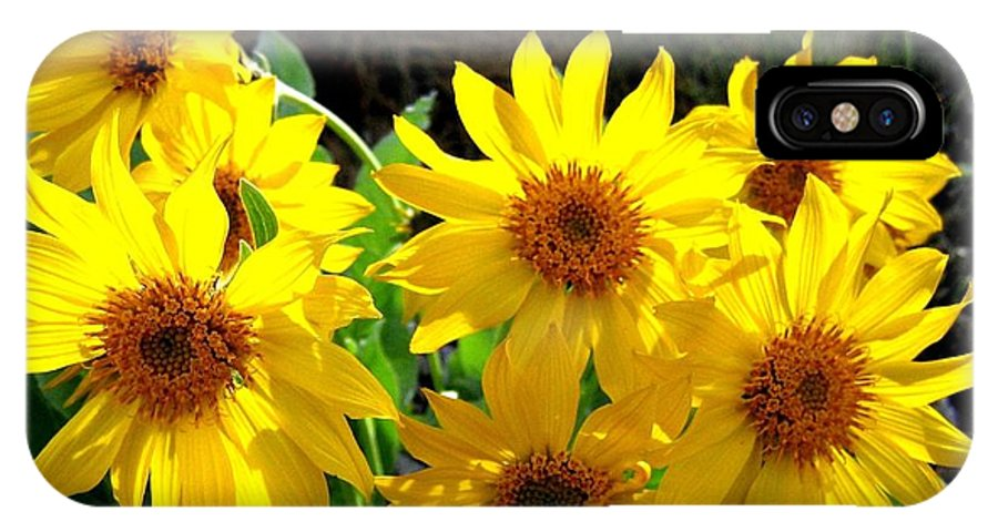 Wildflowers IPhone X Case featuring the photograph Sunlit Wild Sunflowers by Will Borden