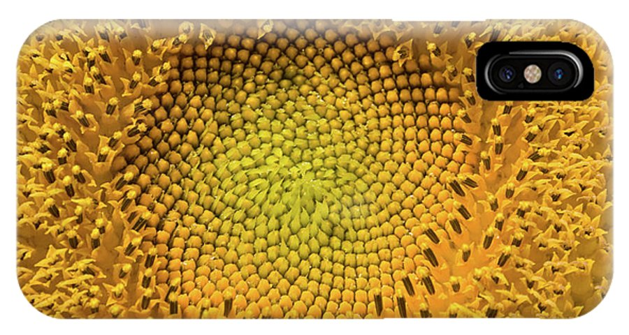 Sunflower Close IPhone X Case featuring the photograph Sunflower Close by Dylan Punke