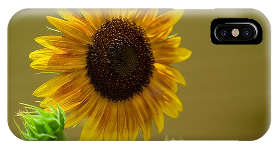 Bee IPhone X Case featuring the photograph Sunny Day by Jasmin Hrnjic
