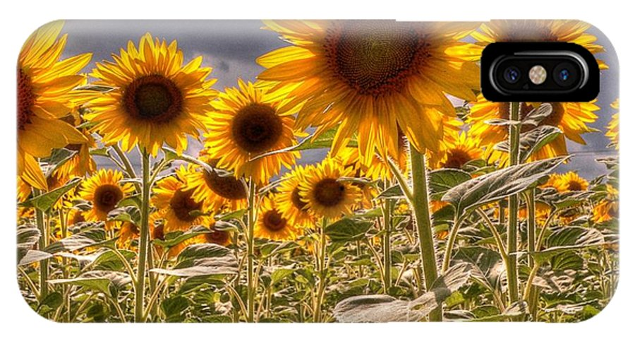 Sunflowers IPhone X Case featuring the photograph Sunny Flower Day by David Bearden