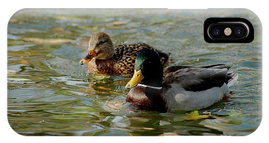 Nature IPhone Case featuring the photograph Sunny Mallard Ducks by D Nigon