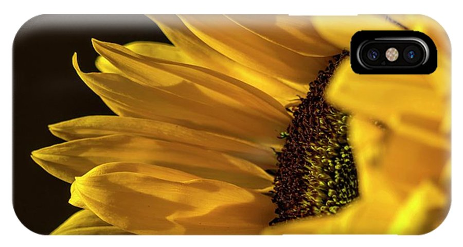 Sunflower IPhone X Case featuring the photograph Sunny Too By Mike-hope by Michael Hope