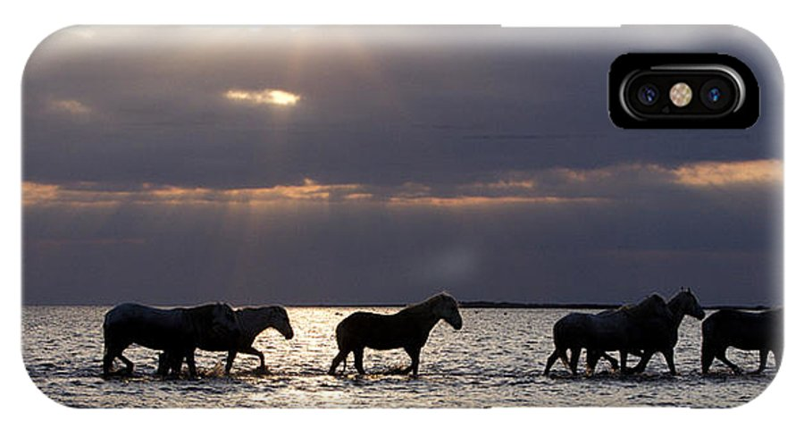 Horses IPhone X Case featuring the photograph Sunrise Horses by Carol Walker