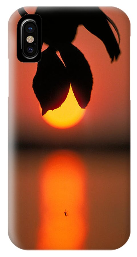 Sunset IPhone X Case featuring the photograph Sunset And Spider by Thomas Firak