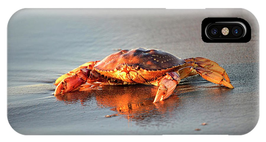 Denise Bruchman IPhone X Case featuring the photograph Sunset Crab by Denise Bruchman