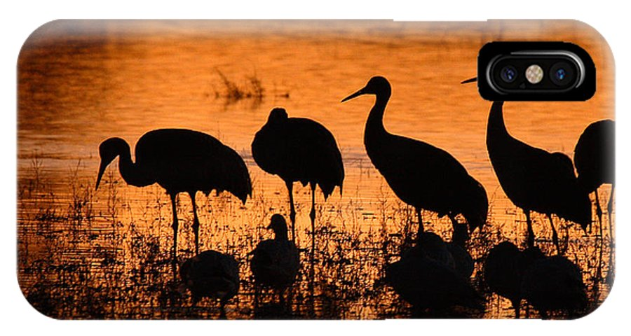 Crane IPhone X Case featuring the photograph Sunset Reflections Of Cranes And Geese by Max Allen