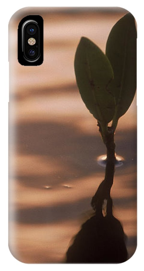 Nature IPhone X Case featuring the photograph Surfacing Mangrove by Kimberly Mohlenhoff