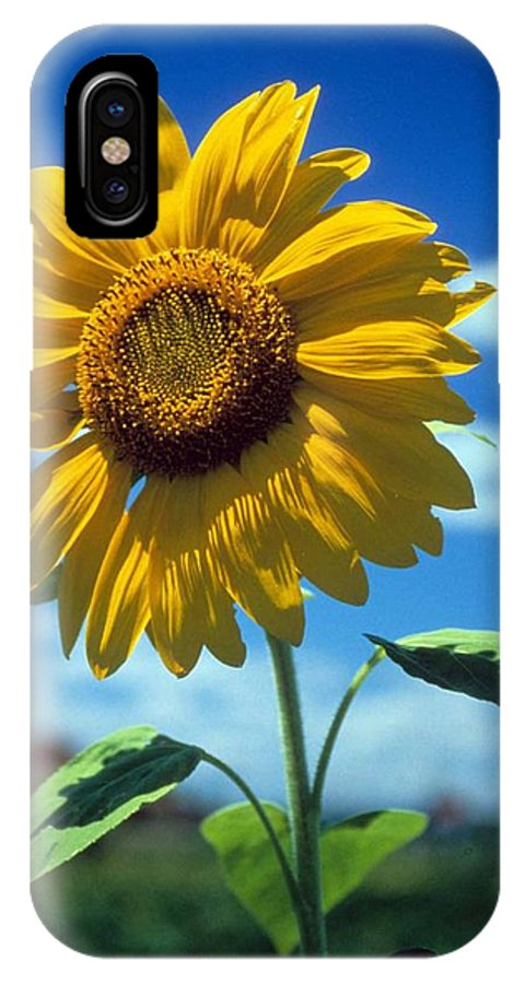 Sussex County IPhone X Case featuring the photograph Sussex County Sunflower by Laurie Paci