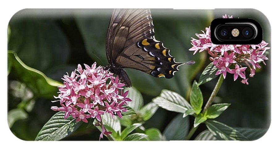 Buttrfly IPhone Case featuring the photograph Swallowtail Buterfly by Sven Brogren